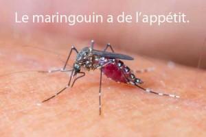 Maringouin : insecte en québécois