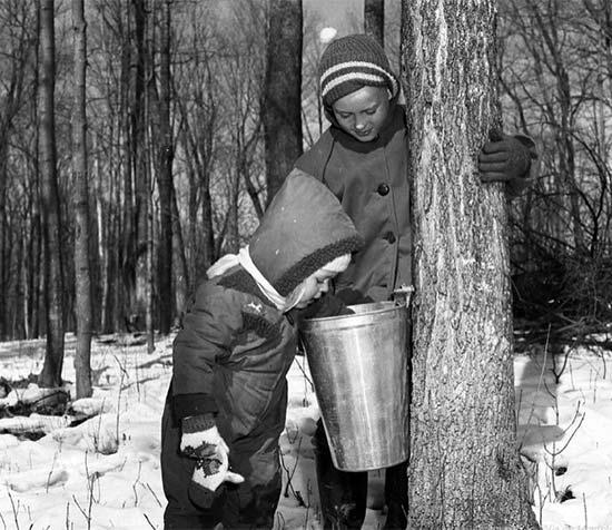 Le temps des sucres dans les années 1960 au Québec