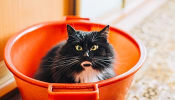 Un chat caché dans une chaudière (seau)